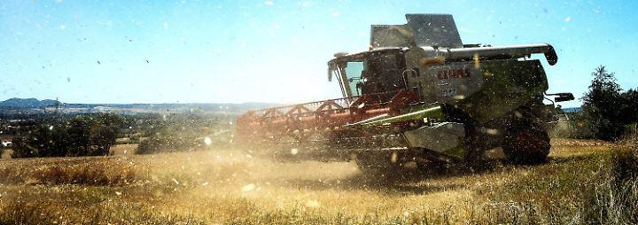 """""""Für das Getreide ist es gelaufen"""": Trockenheit lässt Landwirte um Ernte bangen"""