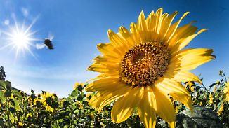Örtlich Gewitterrisiko: Sonne verwöhnt fast ganz Deutschland