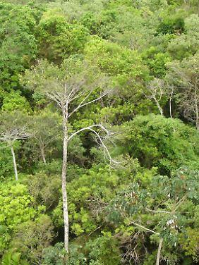 Wald in Brasilien: Dort schwand die Baumfläche am stärksten.