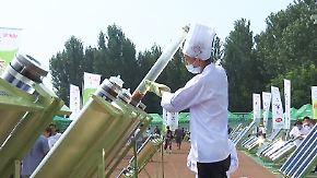 """""""Solar Cookout"""": Chinesen kochen mit der Kraft der Sonne"""