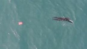 Zweieinhalb Monate auf hoher See: Er schwimmt und schwimmt und schwimmt