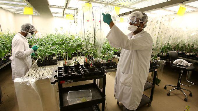Gleich zu Beginn der Monsanto-Übernahme ist Bayer mit vielen Probleme konfrontiert.