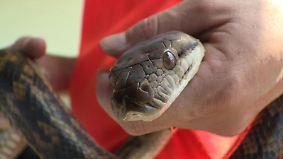 n-tv Dokumentation: Tierisch tödlich - Willkommen in Australien 9