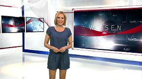 n-tv Wissen: Thema u.a.: Spitzenreiter in luftiger Höhe