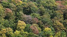 Klimawandel erfordert Umbau: Wie sich deutsche Wälder verändern müssen