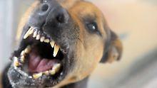 Eltern machen falsche Angaben: Hund verletzt Fünfjährige schwer
