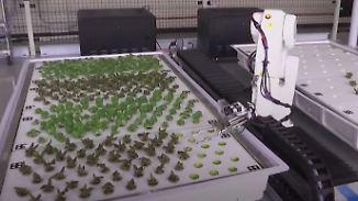 Farm der Zukunft: Roboter züchten Salatpflanzen ohne Menschenhand
