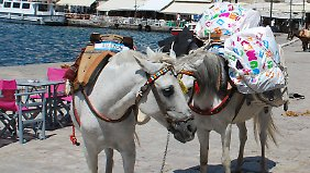 Auch auf der Insel Hydra bringen Mulis Touristen und deren Gepäck zu ihren Quartieren.