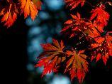 Kühlere Luft ab Wochenmitte: Sommerlicher Herbst bleibt Deutschland noch erhalten