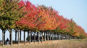 Allmählich wird es kühler: Oktober bleibt ziemlich golden