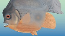 Fundsache, Nr. 1388: Urzeit-Fisch mit Reißzähnen entdeckt