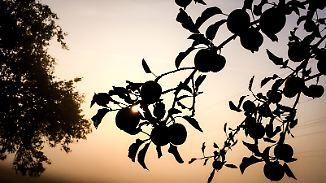 Frühnebel und immer mehr Wolken: Sonne legt sich ins Zeug, kann Abkühlung nicht stoppen