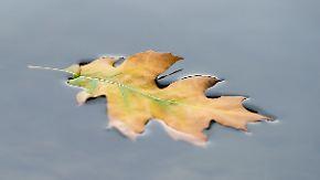 Regen, Graupel, ungemütlich: Es wird frischer
