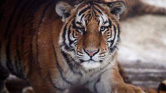 """""""Komasaufen auf Kosten des Planeten"""": WWF-Report: Menschen ruinieren die Erde"""