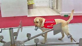 Die Wissenschaft hat festgestellt ...: Hundenasen erschnüffeln Malaria an Socken