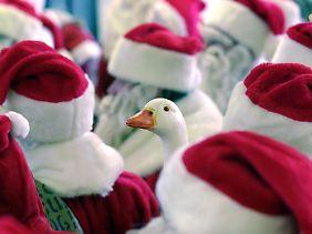 Die Weihnachtsgans ist in Deutschland sehr verbreitet.
