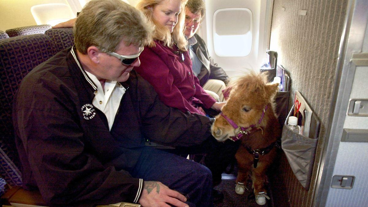 Wenn das Pferd mit ins Flugzeug darf