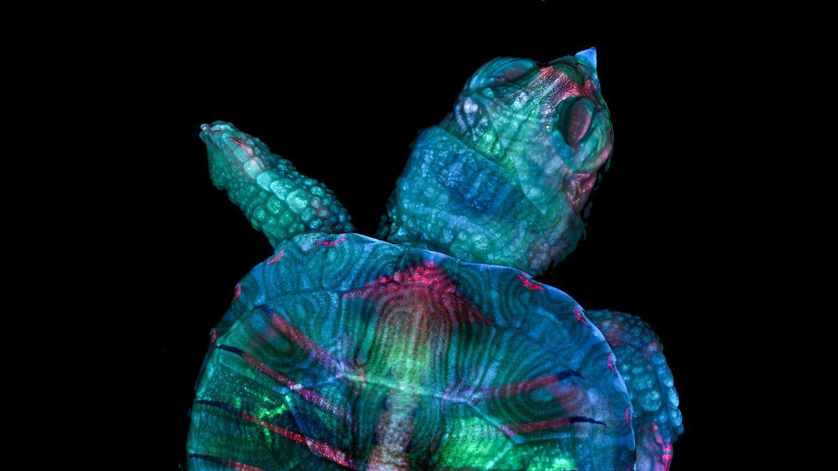 Preisgekrönte Fotos zeigen mikroskopische Kunst