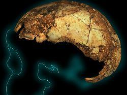 Urahn des Menschen: Mit wem Homo erectus in Afrika lebte