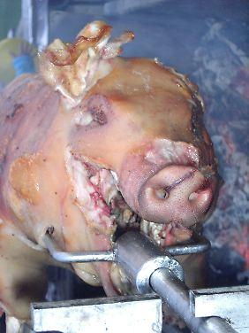 Ferkel am Spieß. Veganer verzichten bewusst auf alle tierischen Produkte, manche auch aus Tierschutzgründen.