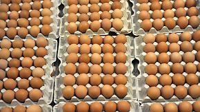 Dioxin-Skandal: Foodwatch: Pilzgift könnte Ursache sein