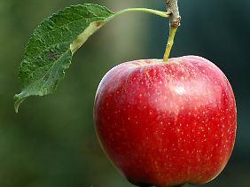 Nicht nur mit gesundem Inneren, sondern auch mit ästhetischem Äußeren: der Apfel.