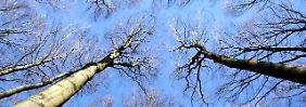 Frage & Antwort, Nr. 166: Sind Bäume lärmempfindlich?