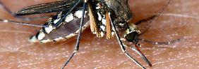 Mehr als nur ein lästiger Plagegeist: Die Mücke