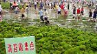Glitschiges Gestrüpp?: Algen können mehr