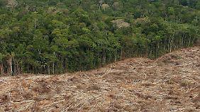 Seit der Ankunft der Europäer um 1500 wurden 93 Prozent des brasilianischen Regenwaldes zerstört.