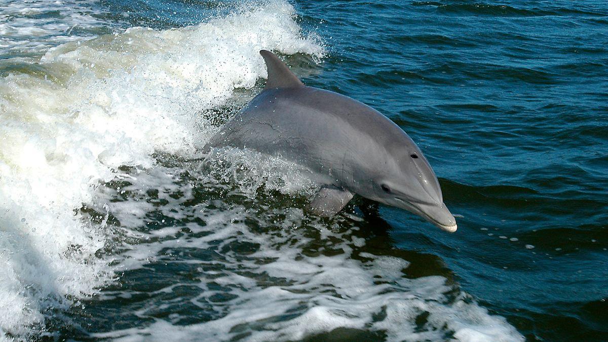Delfine Und Meer