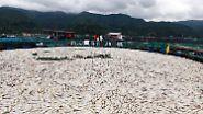 Kälteeinbruch auf den Philippinen: Tonnenweise toter Fisch