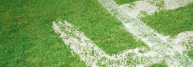 Wie Neonazis den Fußball missbrauchen: Angriff von Rechtsaußen