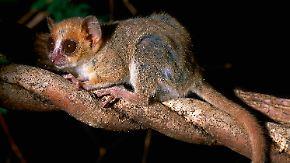 Gute Nachricht des Tages: 615 neue Arten auf Madagaskar