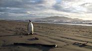 Die dramatische Geschichte von Happy Feet: Die Odyssee eines Pinguins