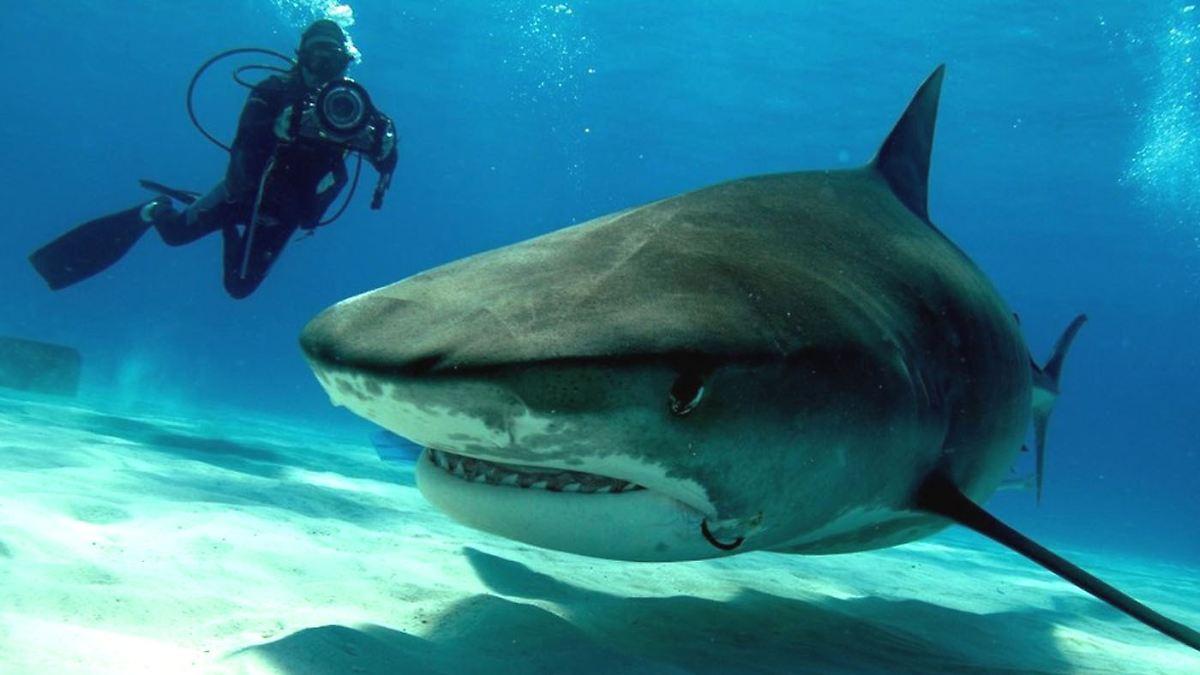 Horrorfilme Mit Haien