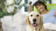 Eine Alternative kann auch ein Tiersitter sein.