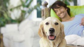 n-tv Ratgeber: Augen auf beim Hundekauf