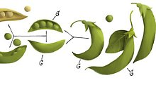 Google Doodle am 20. Juli 2011 zum 189. Geburtstag von Gregor Mendel.