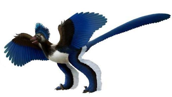 Xiaotingia zhengi in der Rekonstruktion: mit dem Archaeopteryx zwar eng verwandt, aber zu einem parallelen Zweig der Vögel gehörig.