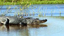 Zeugen der Urzeit: Krokodile, Alligatoren und Gaviale