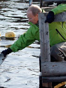 """Erst am Freitag half Putin, den Beluga-Wal """"Dasha"""" mit einem Peilsender zu versehen."""