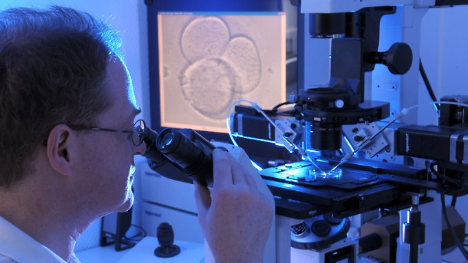 Die Befruchtung menschlicher Eizellen unter einem Mikroskop.