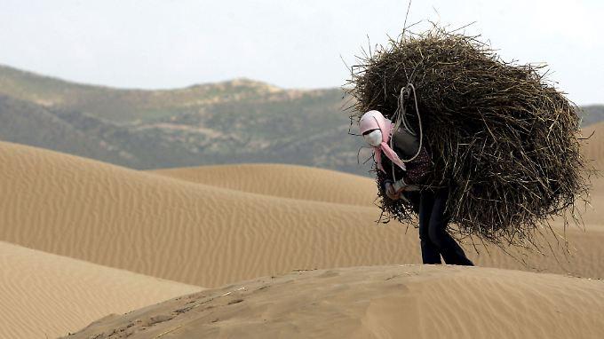 Gute Nachricht des Tages: Blühende Wüsten gegen den Klimawandel