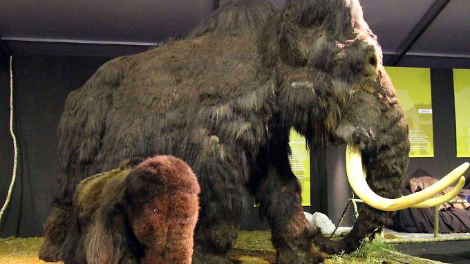 Ein Mammut-Modell mit Jungtier.