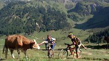Teils tödliche Verletzungen: Tirol will Kuhangriffe auf Touristen stoppen