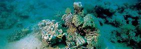 Klar ist, dass Korallen und Muscheln auf den sinkenden pH-Wert reagieren.