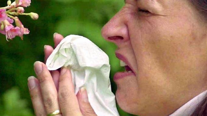 Einfache Tricks helfen: Pollen fliegen immer länger