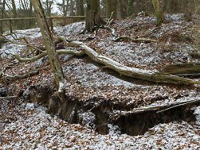 Ein zwei Kilometer langer Riss zieht sich hier durch den Wald.