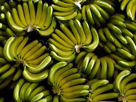 Bananen - vor allem im Süden Indiens ein wichtiges Nahrungsmittel für die oft vegetarisch lebende Bevölkerung.